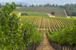 Winery uses custom-built mobile apps to consolidate insights