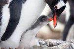 Linux then, and why you should learn it now