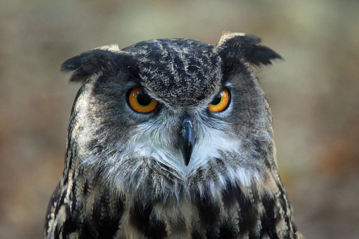 OWL: A 'better' PHP for single-server apps