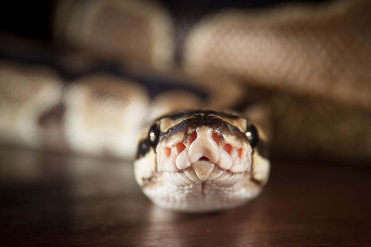 Python's popularity surges as a mainstay language