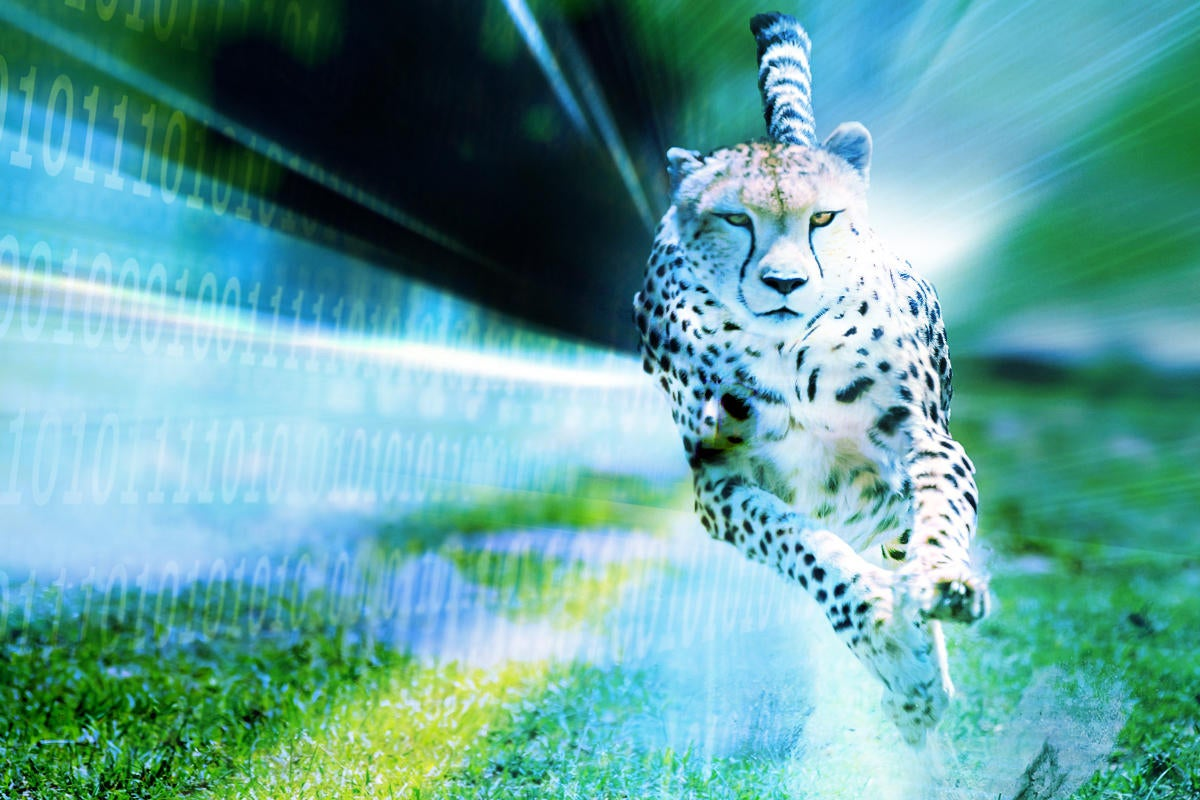 racing speed cheetah chase binary