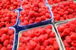 sort filter seprate strawberries in boxes