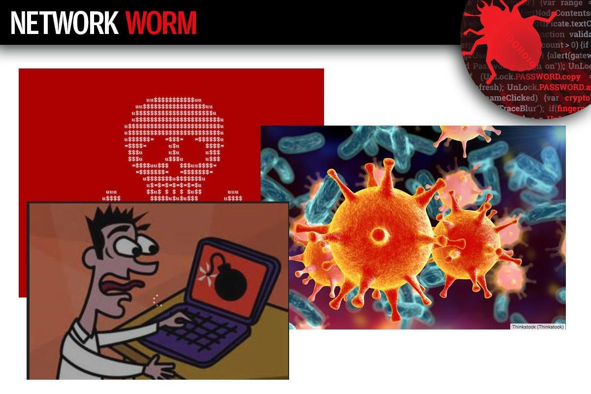 6 network worm