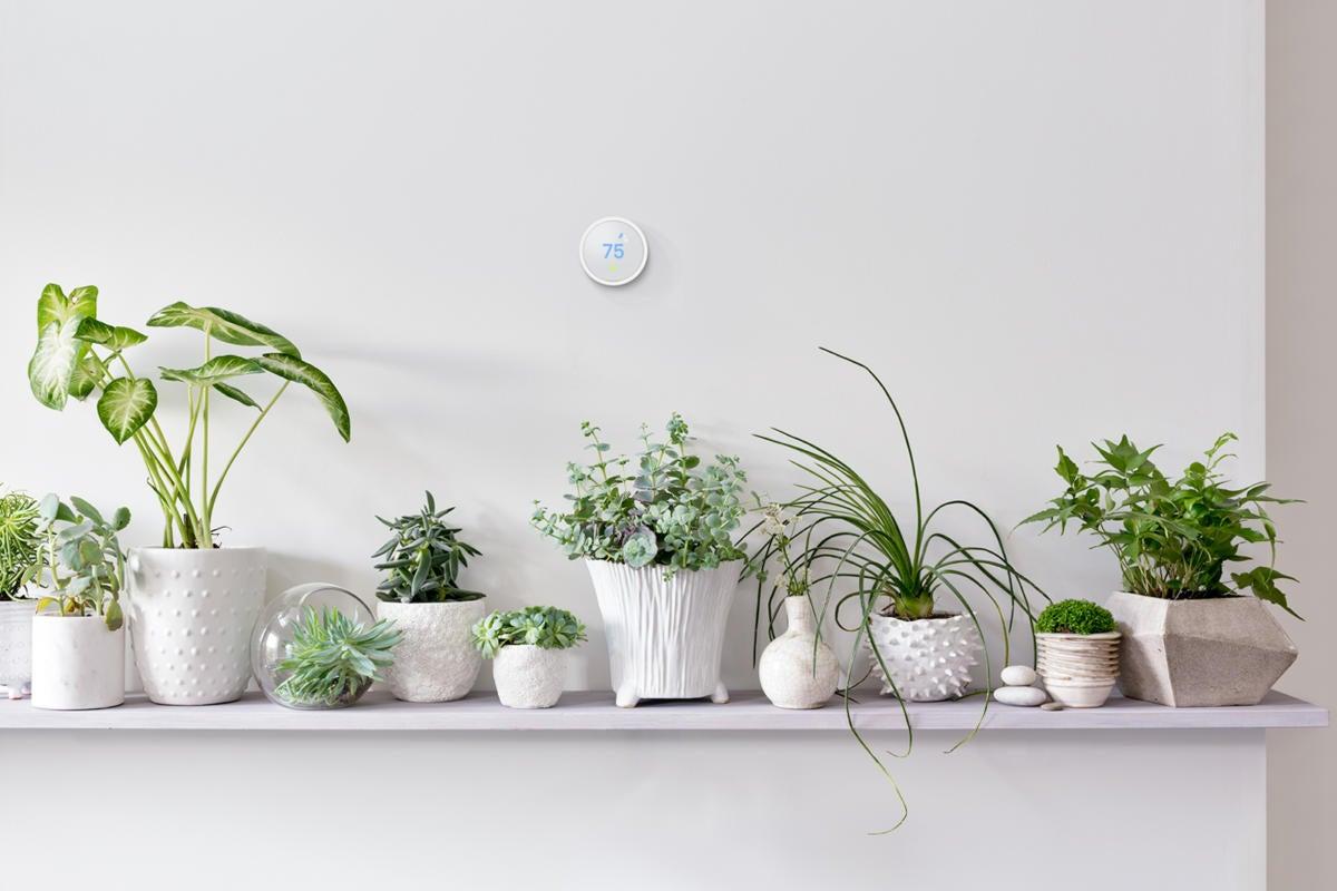 image nte pf lifestyle plantsonshelf 2017q3 v1