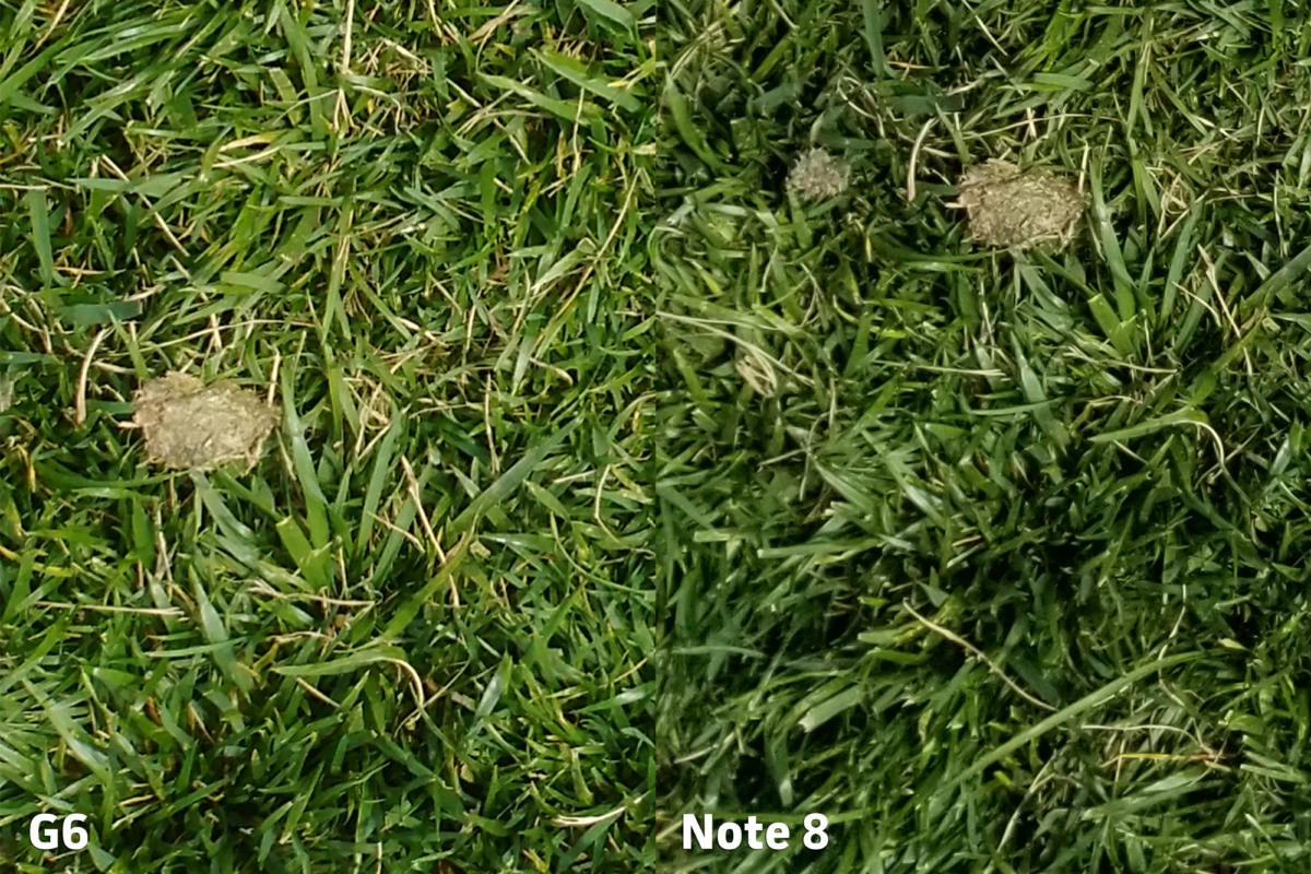 LG G6 vs Samsung Galaxy Note 8 camera clarity 1 punch in
