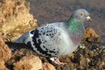 Weird IP networks: Internet via birds and ham radios