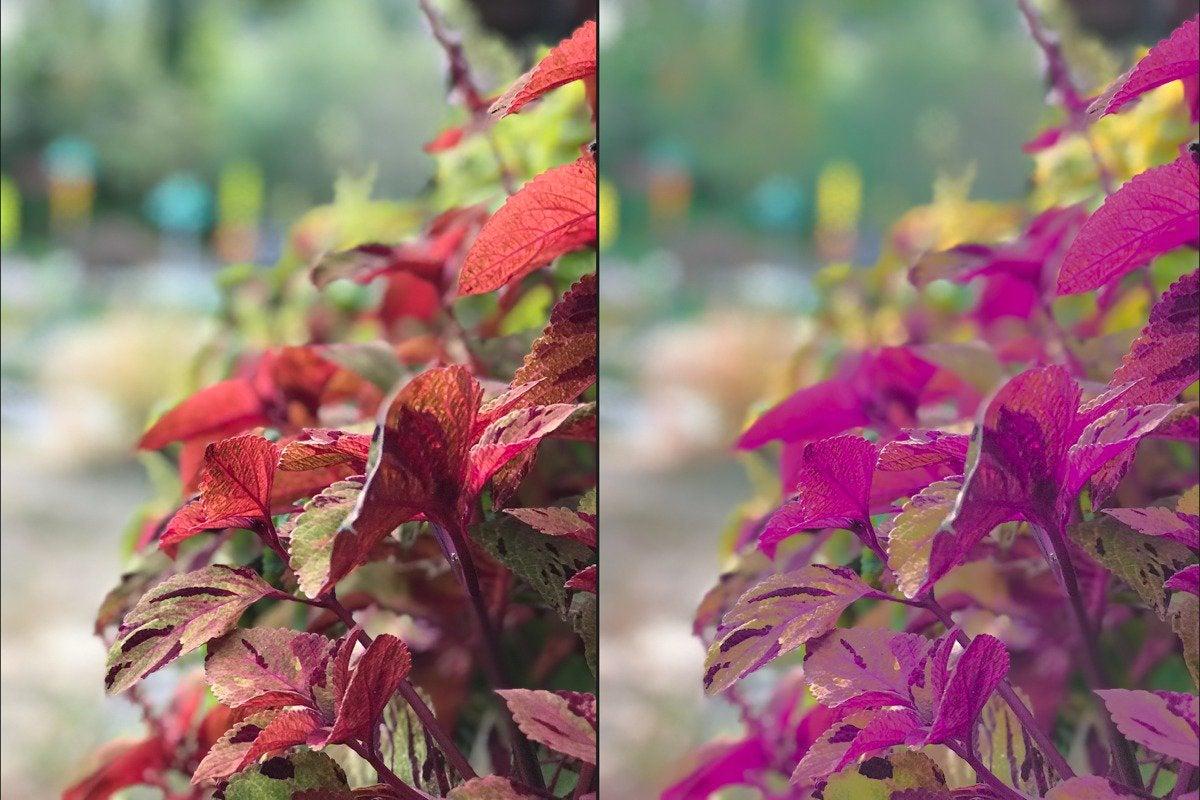 photos high sierra selective color compare