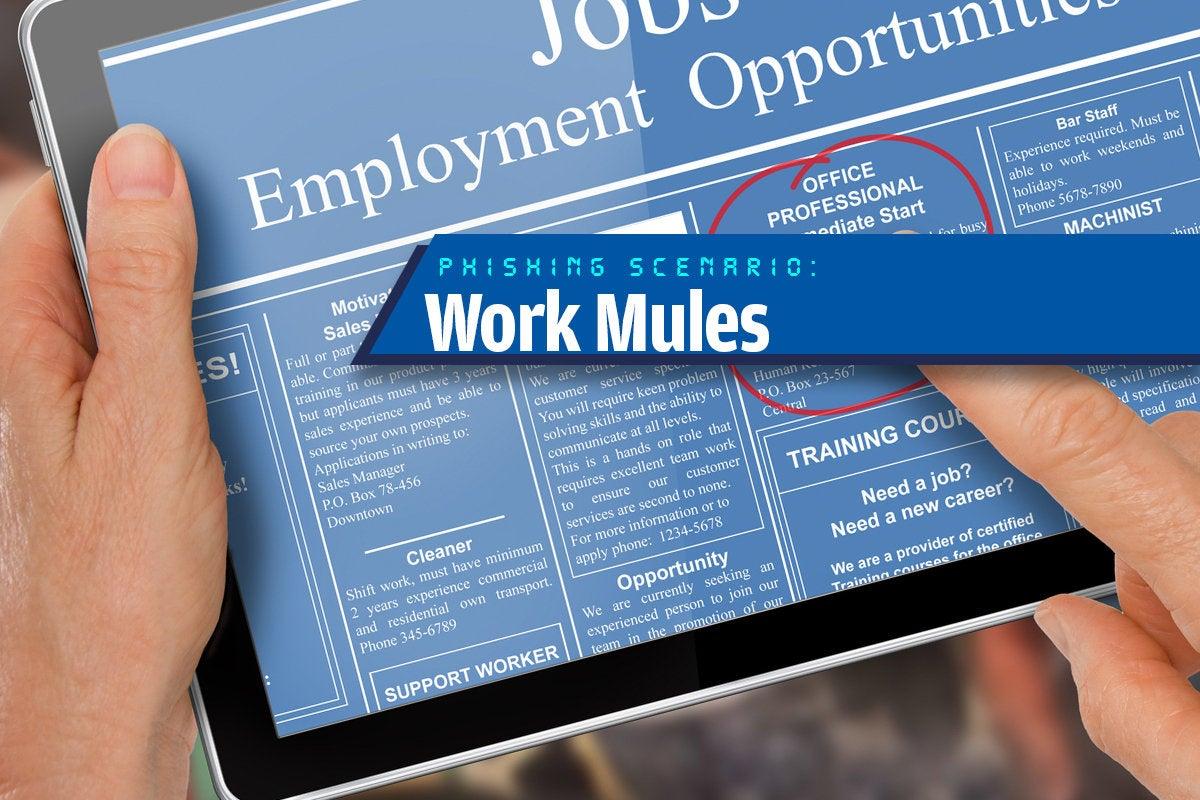 11a work mules