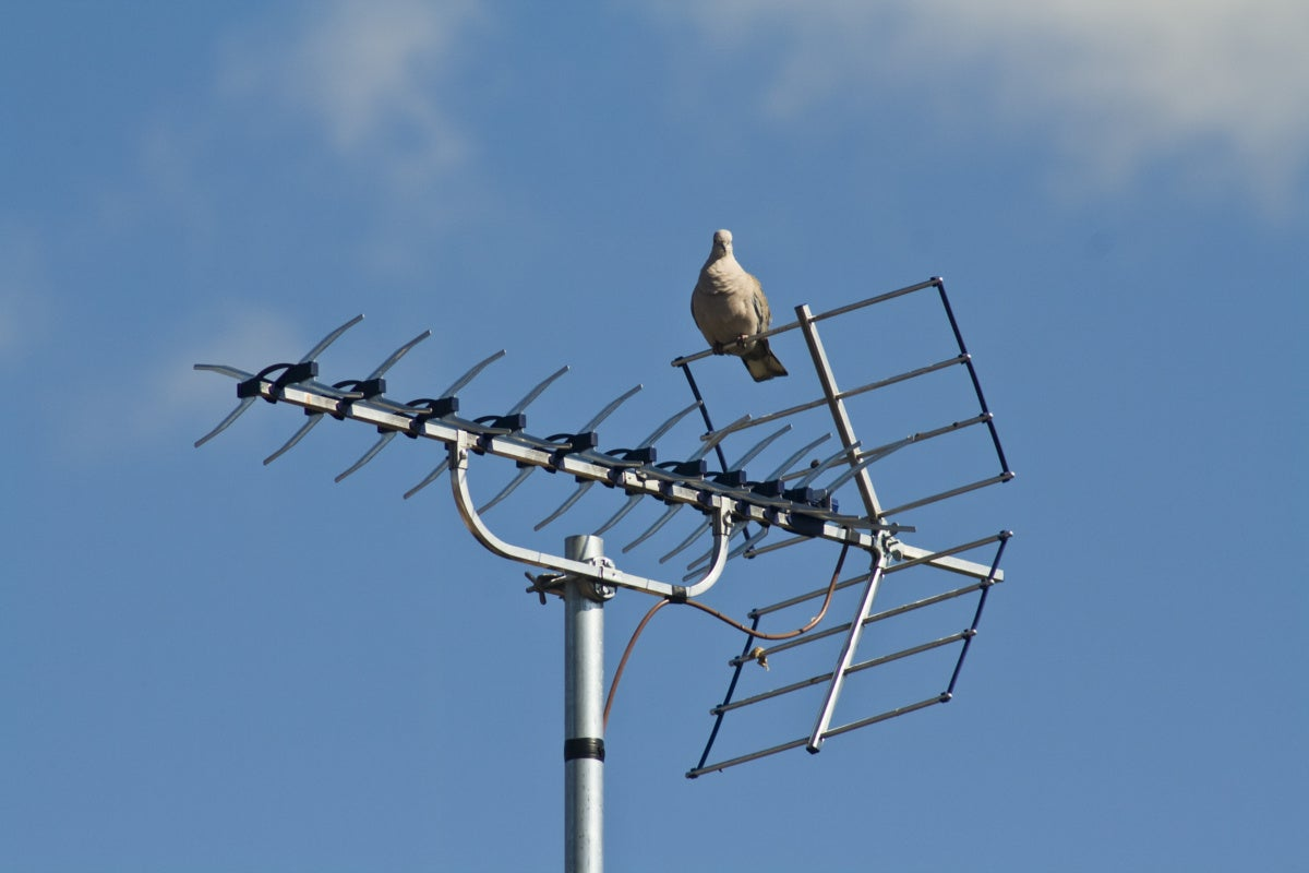 photo image How to choose a TV antenna