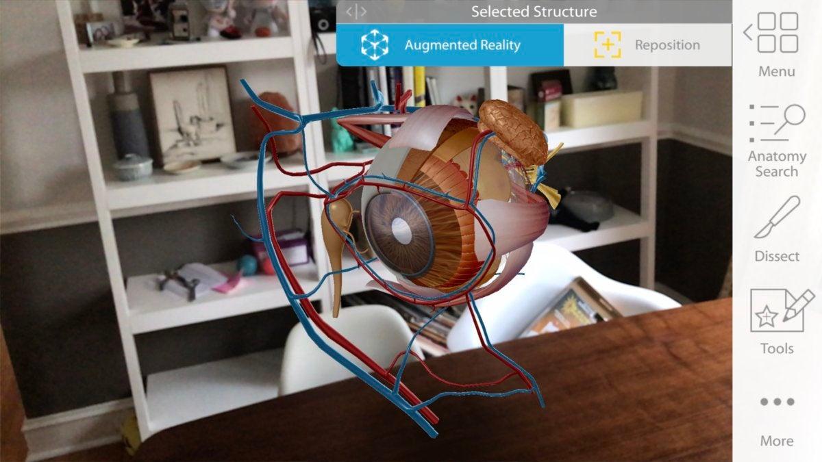 arkit anatomy