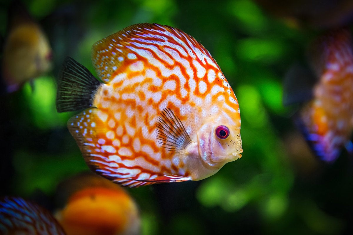 Airport security to include face-scanning fish in virtual aquarium