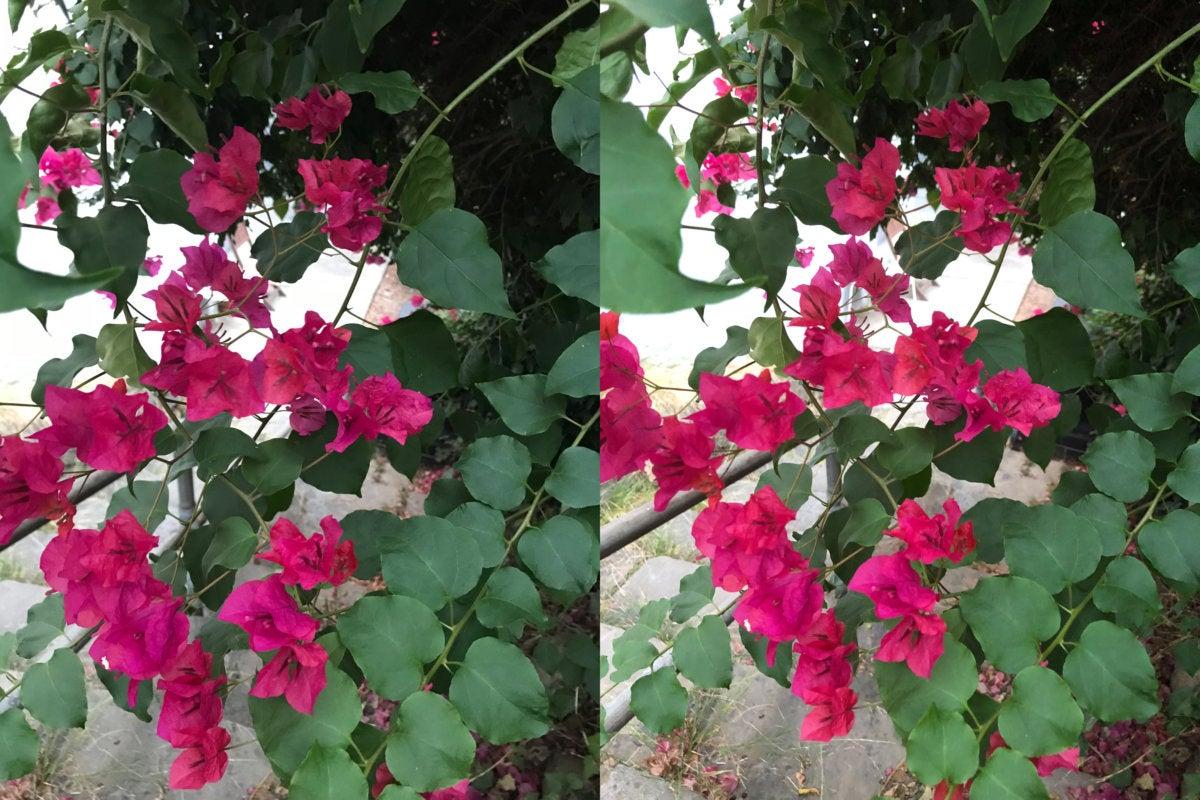 iphone 7 plus vs 8 plus flowers