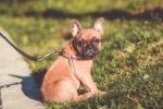 What Retailers Need to Know: Every Dog Has Its Master