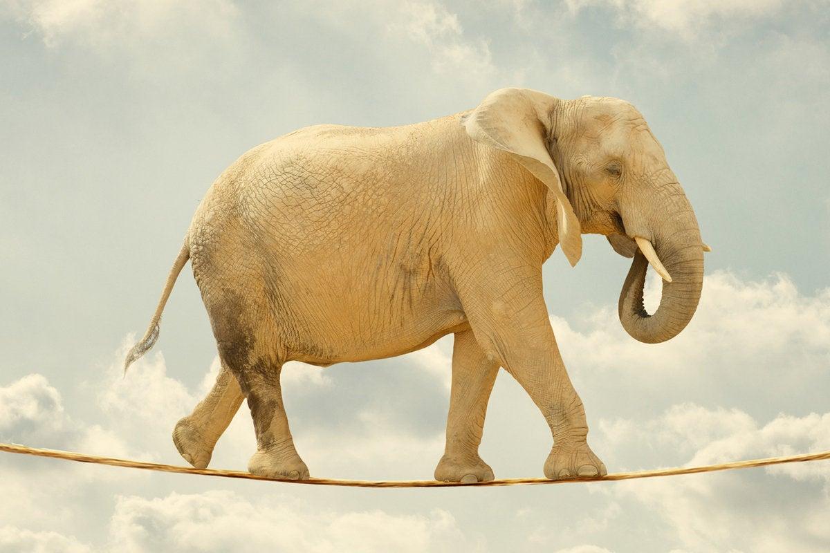elephant tight rope risk agile balance