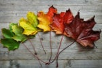 leaves change autumn transformation metamorphosis