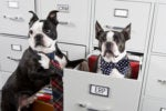 two dogs in file cabinet crm erp comparison similar pairs