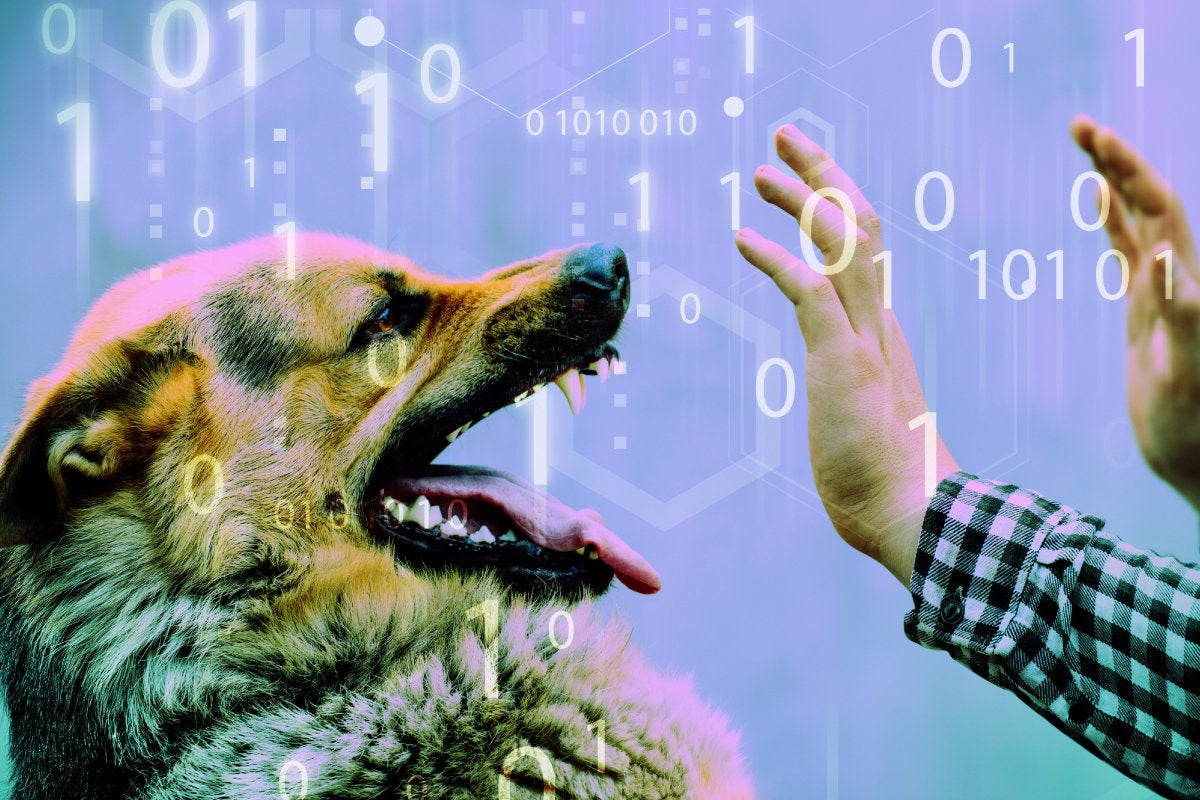 CSO slideshow - Insider Security Breaches - Dog bites the hand that feeds him