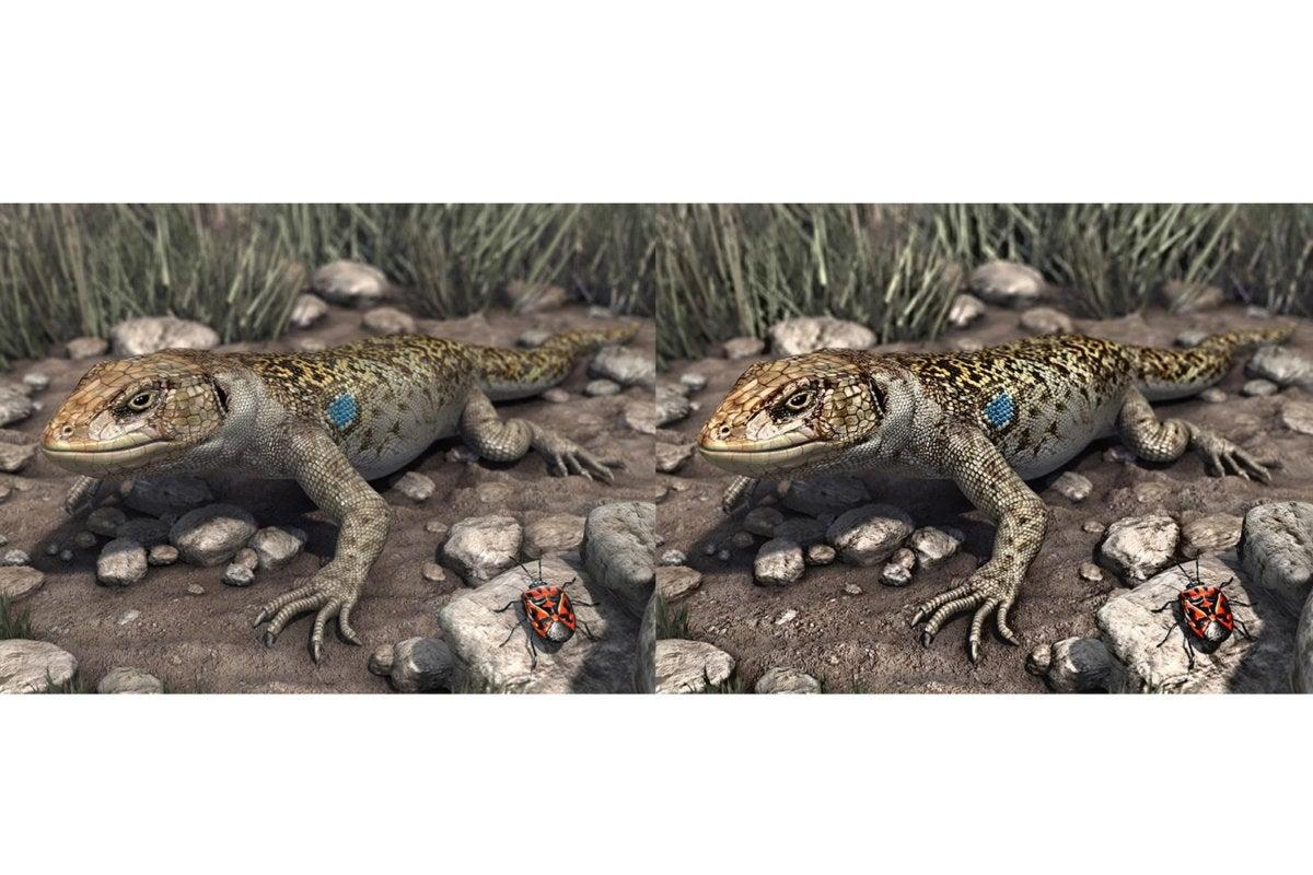 darbeevision reptiles