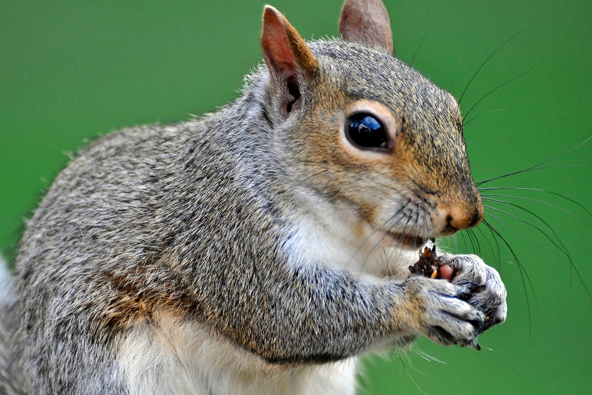 It's time to squirrel away a clean copy of Win10 version 1909