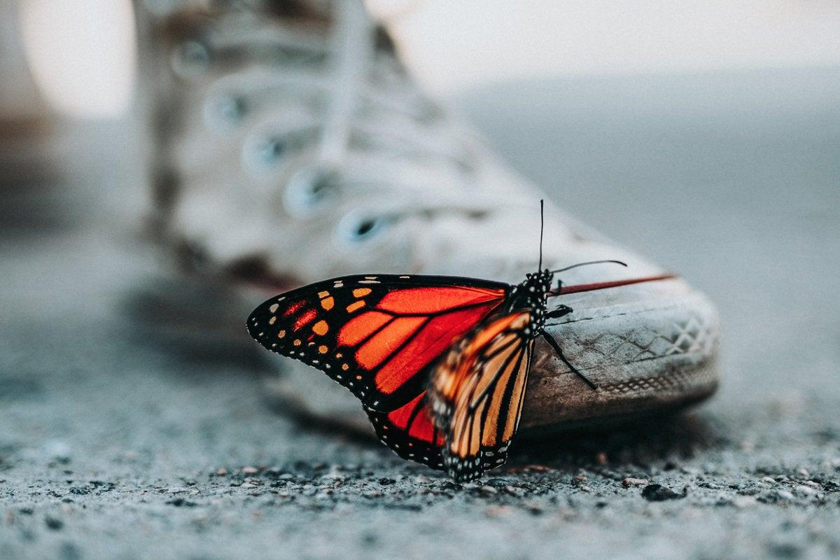digital transformation butterfly sneaker change nathan dumlao 264909 unsplash