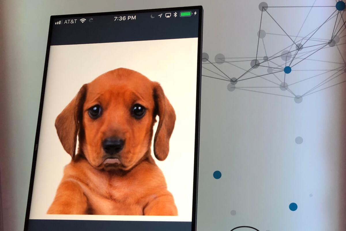 fintech intuit innovation lab chatbot sad puppy