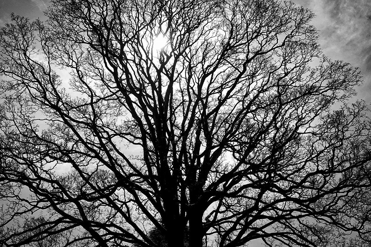 branches / branching / bare tree