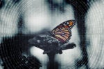 digital transformation / butterfly in an abstract digital environment