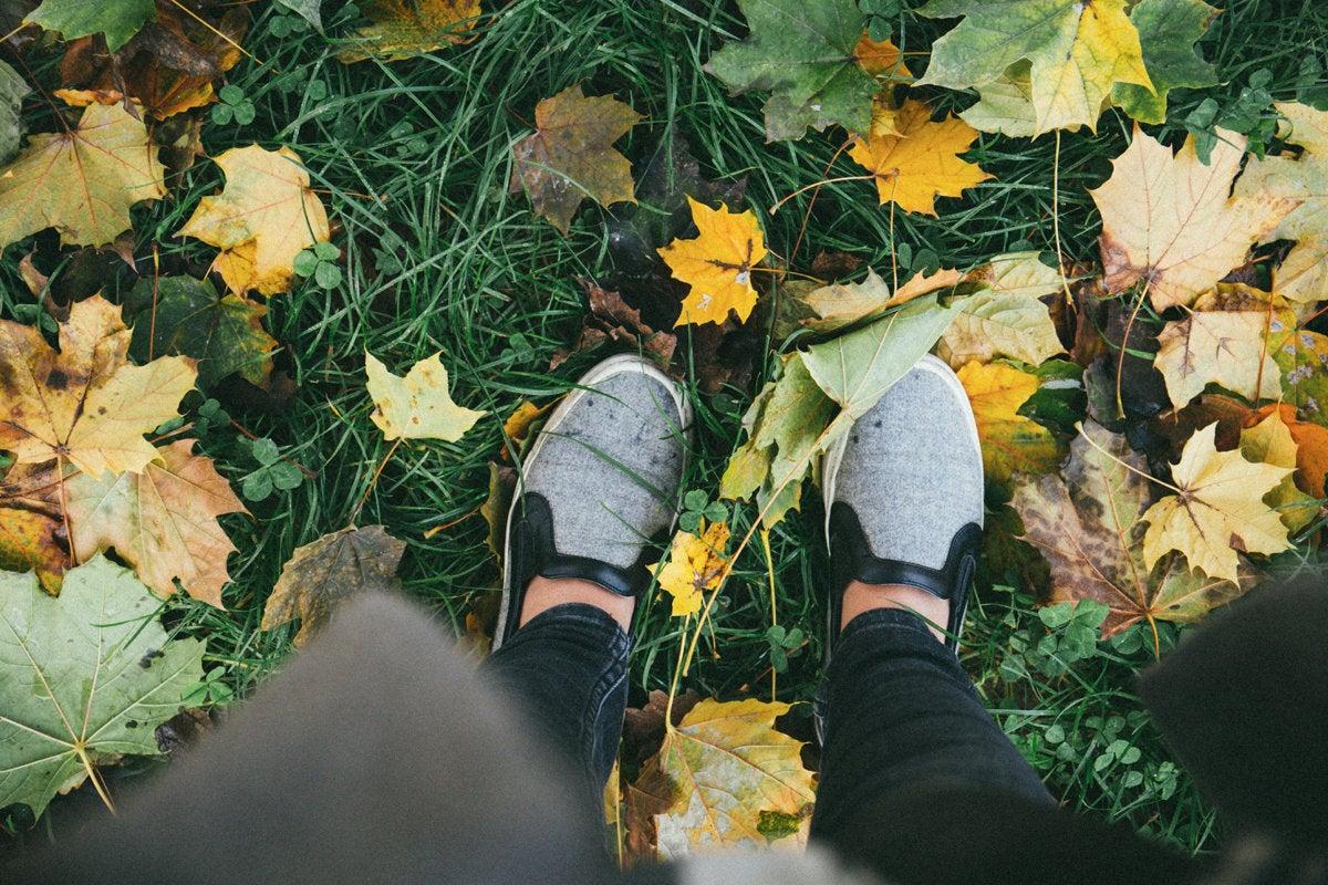 career path change shoes fall leaves seasons forward future alisa anton unsplash