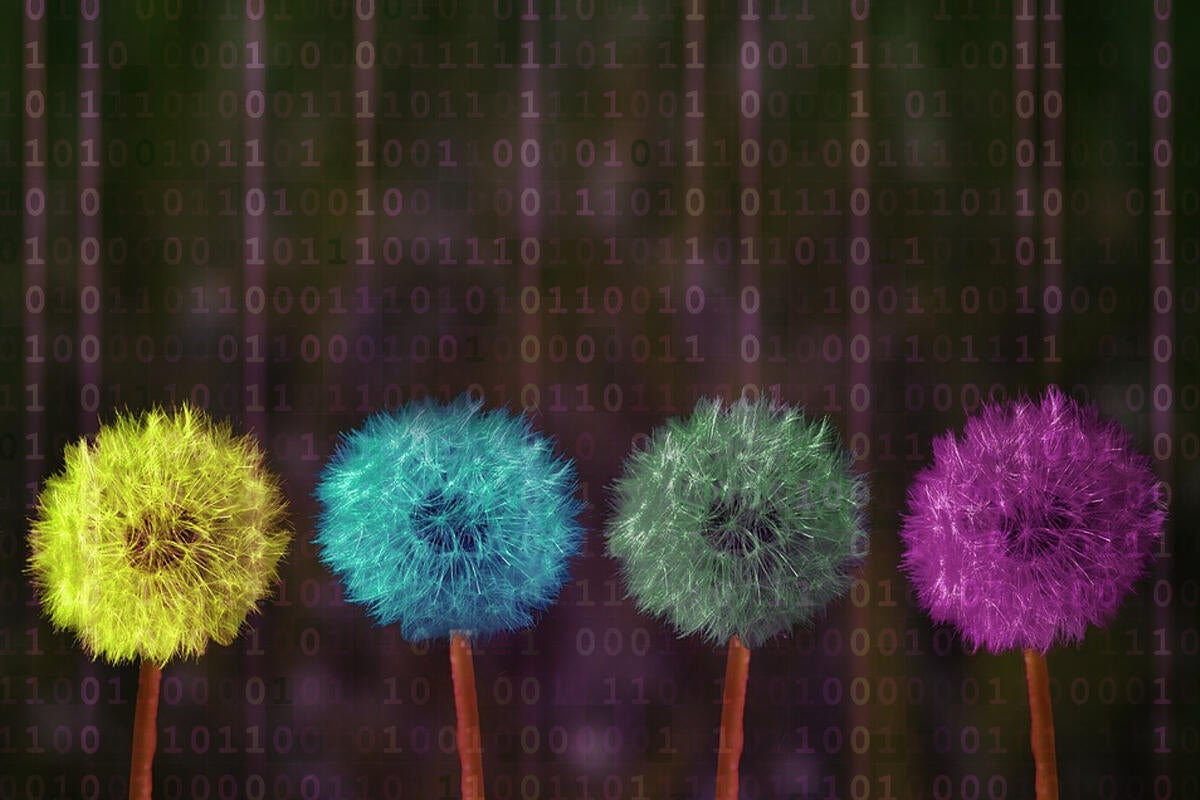 colorful dandelions binary digital transformation change rainbow code by pixabay