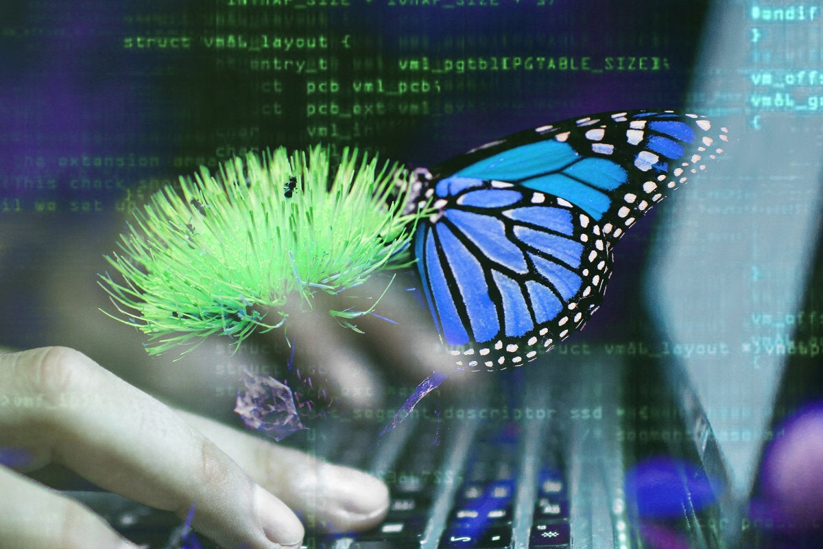 digital transformation butterfly keyboard programmer code  by sean stratton unsplash
