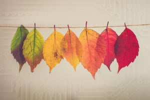 Digital Transformation / Spectrum of change in leaf colors against a background of circuits.