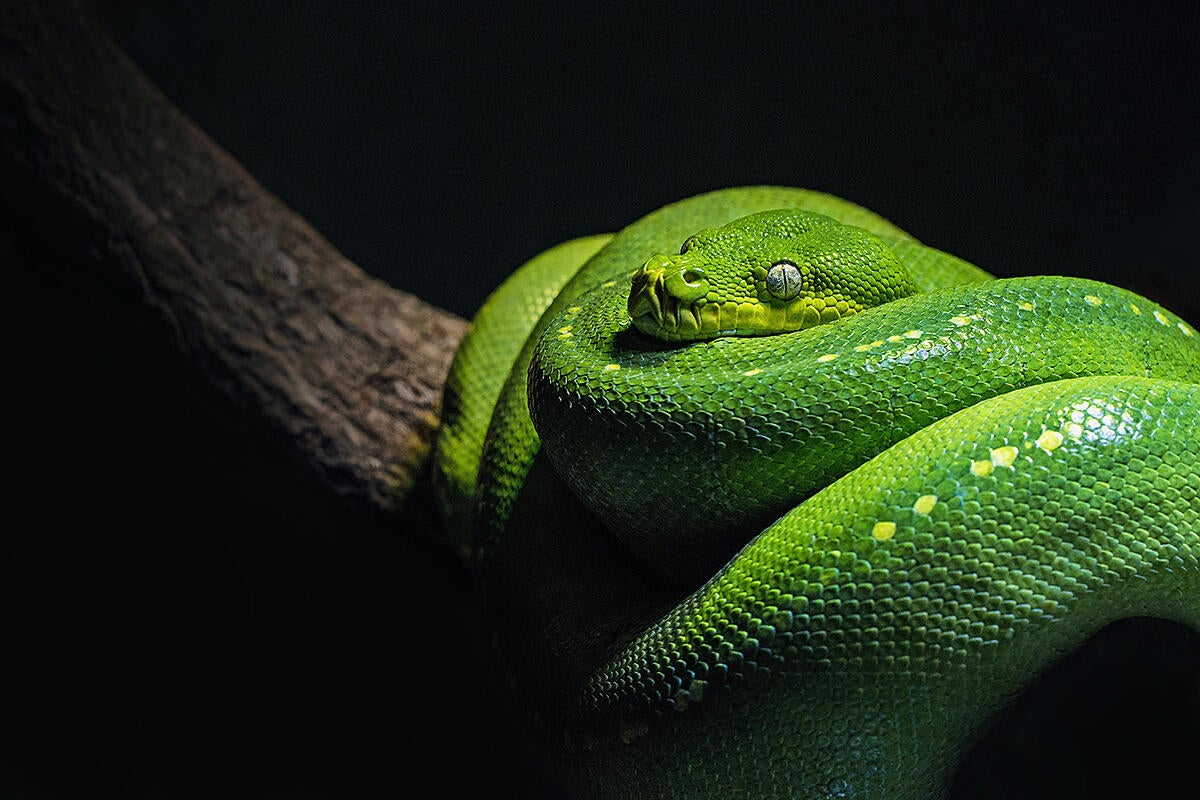 PyCharm Python IDE backs Apple Silicon