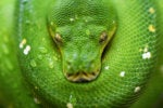 Python to be guided by a steering council