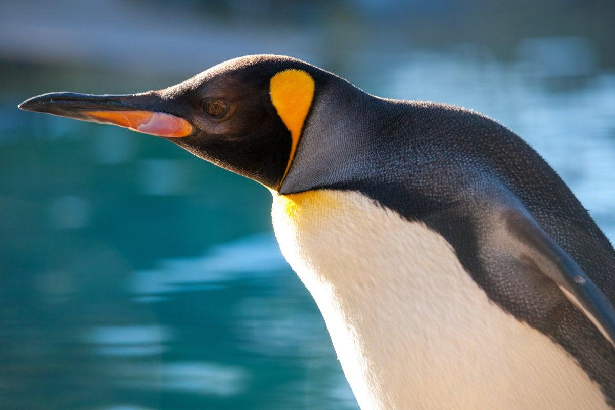 Linux Kernel 418 Better Security Leaner Code