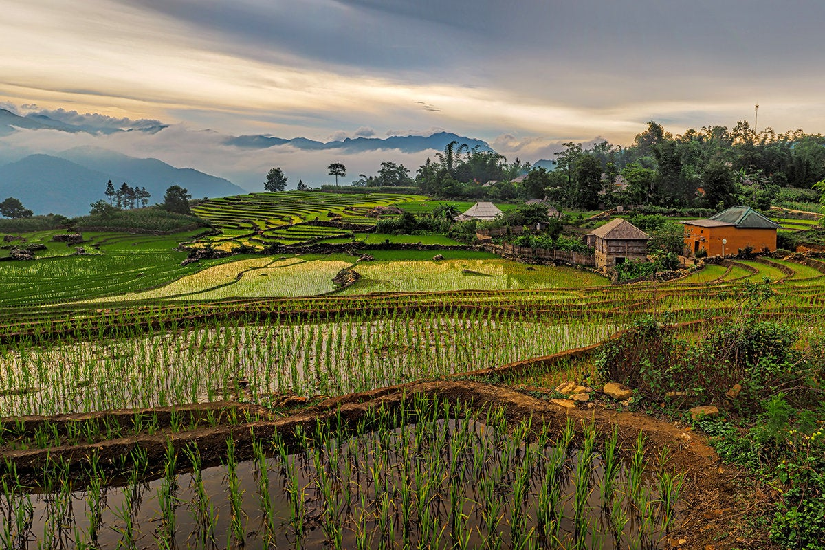 Village of Y Ty rice terraces, Vietnam, Southeast Asia