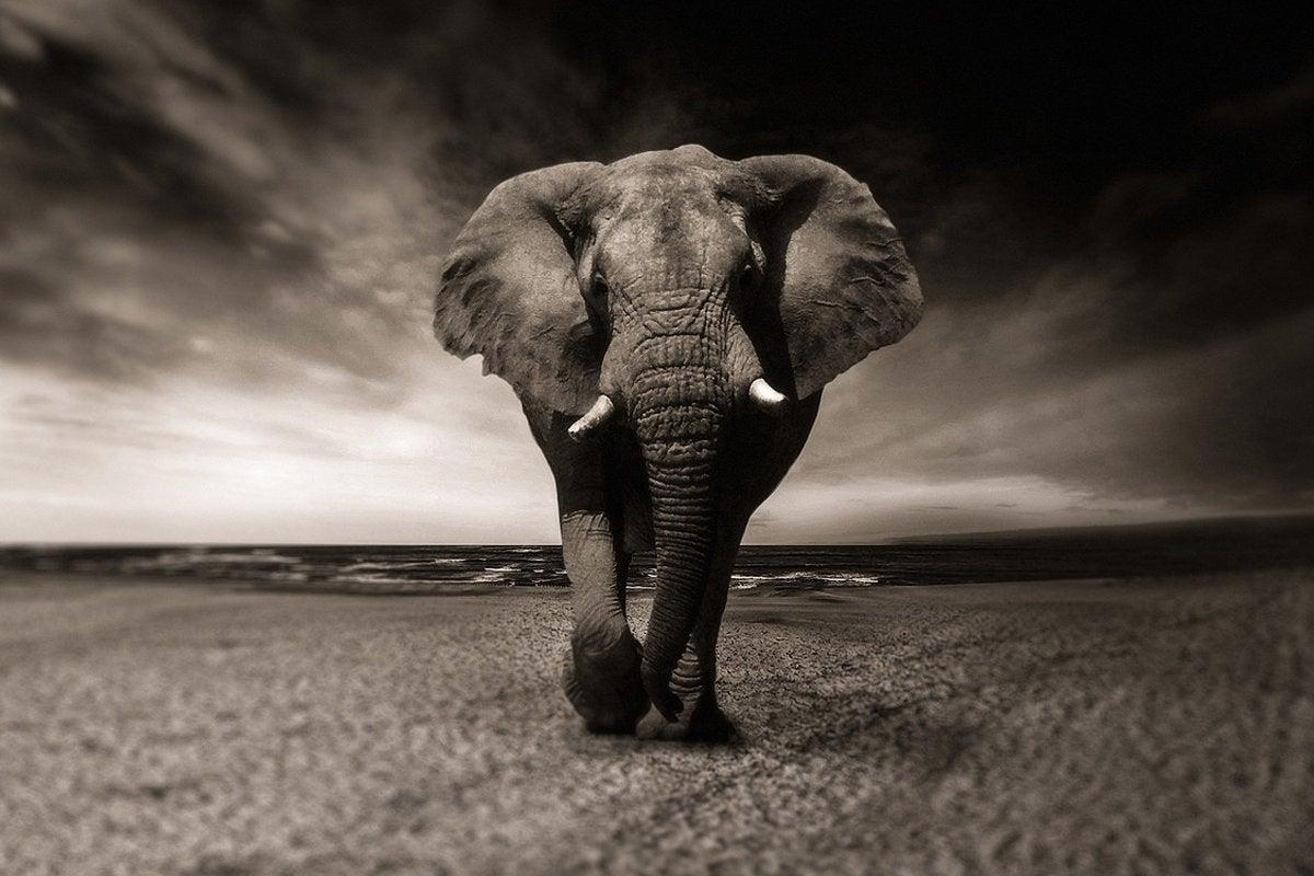 elephant desert tusk ivory postgresql