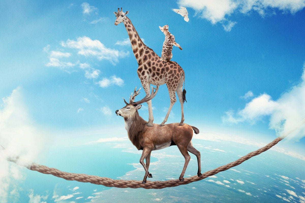 stacked giraffe deer elk stag teamwork risk trust balancing act rope