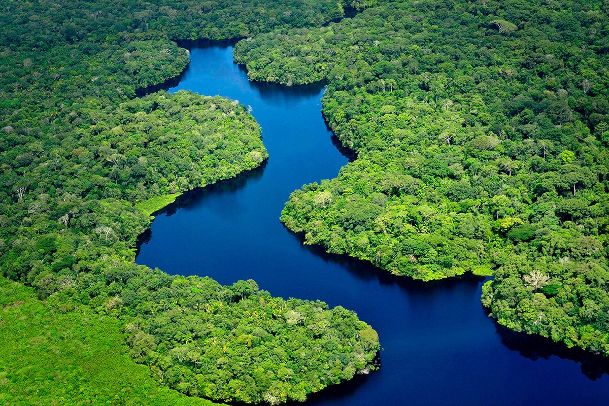 Amazon rainforest, aerial view near Manaus, the capital of the Brazilian state of Amazonas