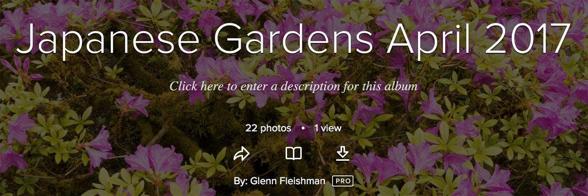 flickr album download