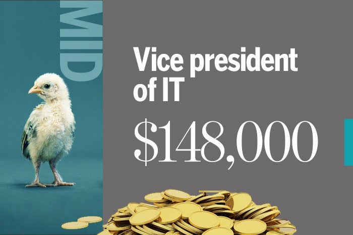 Vice president of IT