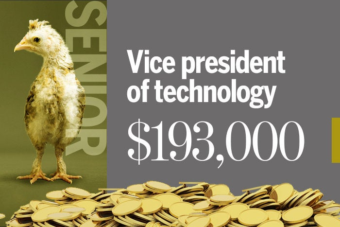 Vice president of technology