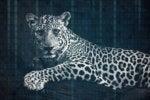 leopard changing spots digital transformation rene bernal binary