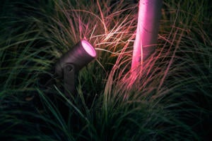 philips hue lily pink