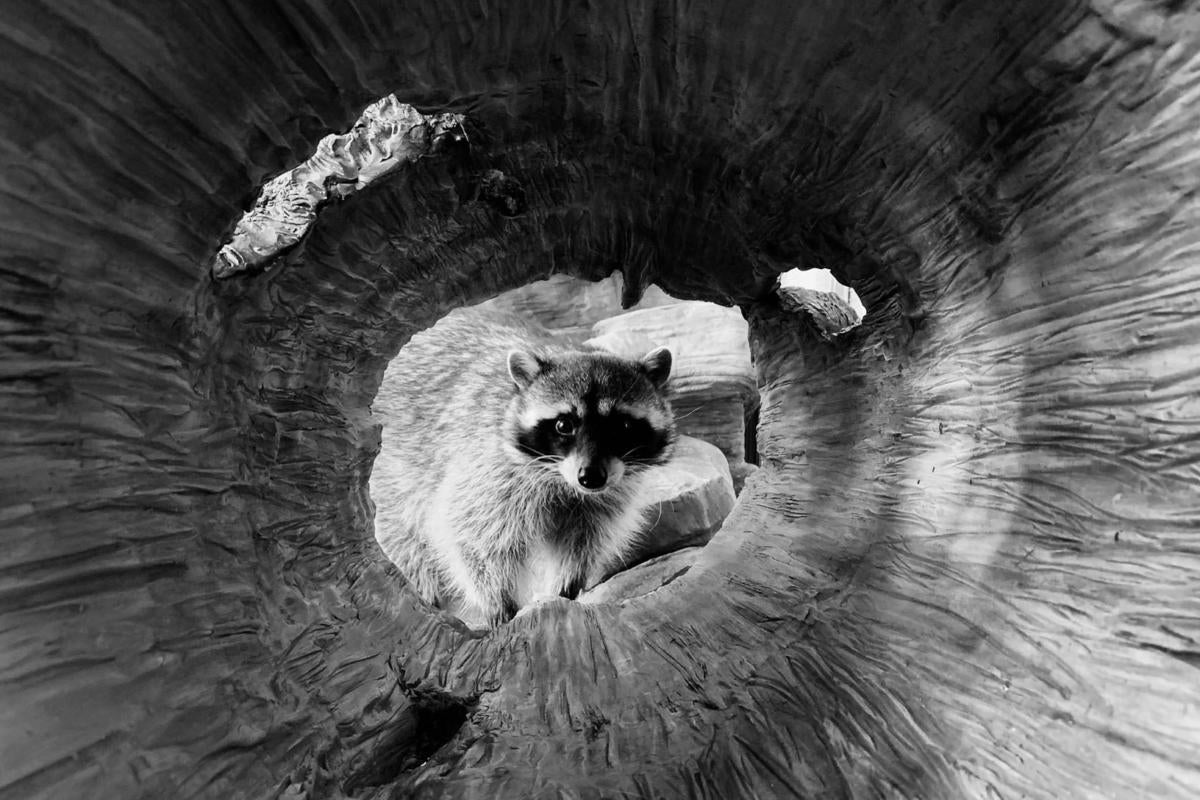 Black And White Photography With Iphone >> Apple Announces Winners Of Its Shot On Iphone Challenge Macworld