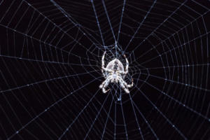 Why you need a dark web expert on your security team