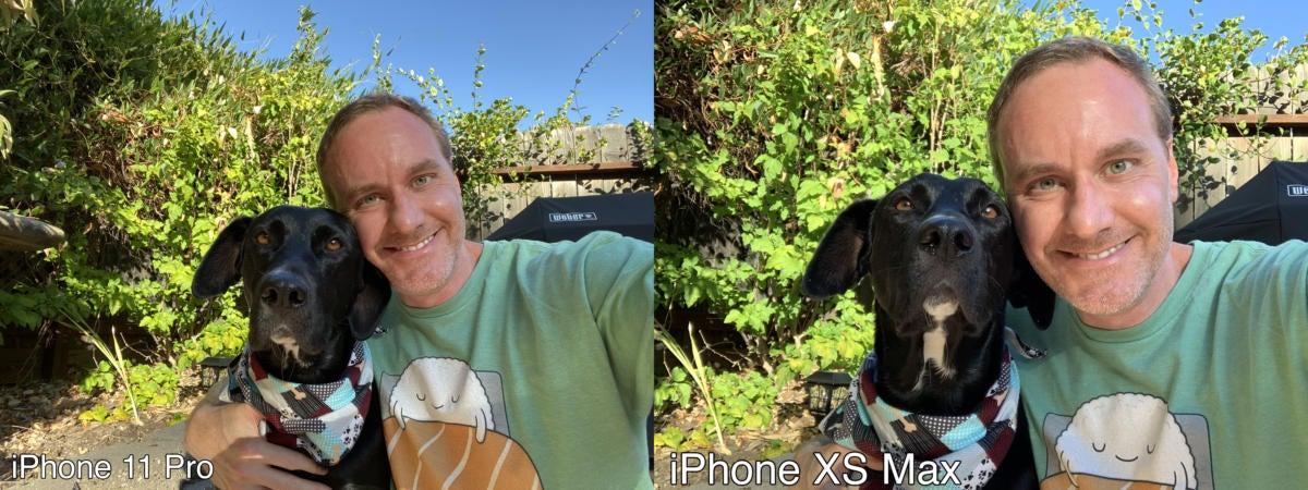 selfie dog compare