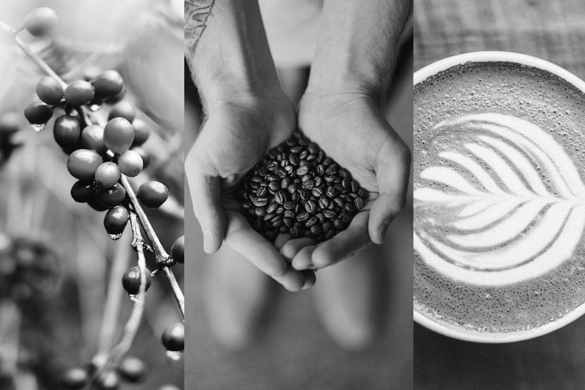 supply chain blockchain coffee beans hand with coffee cup of coffee by nathan dumlao via unsplash