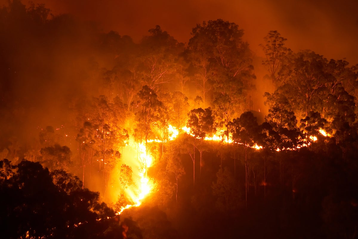 German IoT startup Dryad wants to help prevent forest fires