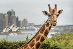 Why Taronga Zoo rolled out Workplace by Facebook