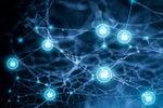 Modern Networks Require High-Performance Internal Segmentation